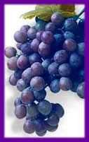 This picture is from the Concord Grape Association site, to go there just click on the link below these grapes.