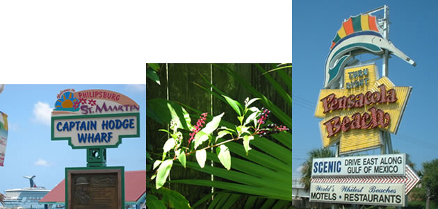 Left to right: St. Maarten, backyard folliage, Pensacola Beach sign